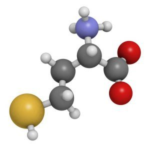 18016532 - homocysteine (hcy) amino acid, molecular model. elevated blood homocysteine levels are associated with cardiovascular disease. atoms are represented as spheres with conventional color coding: hydrogen (white), carbon (grey), oxygen (red), nitrogen (blue),