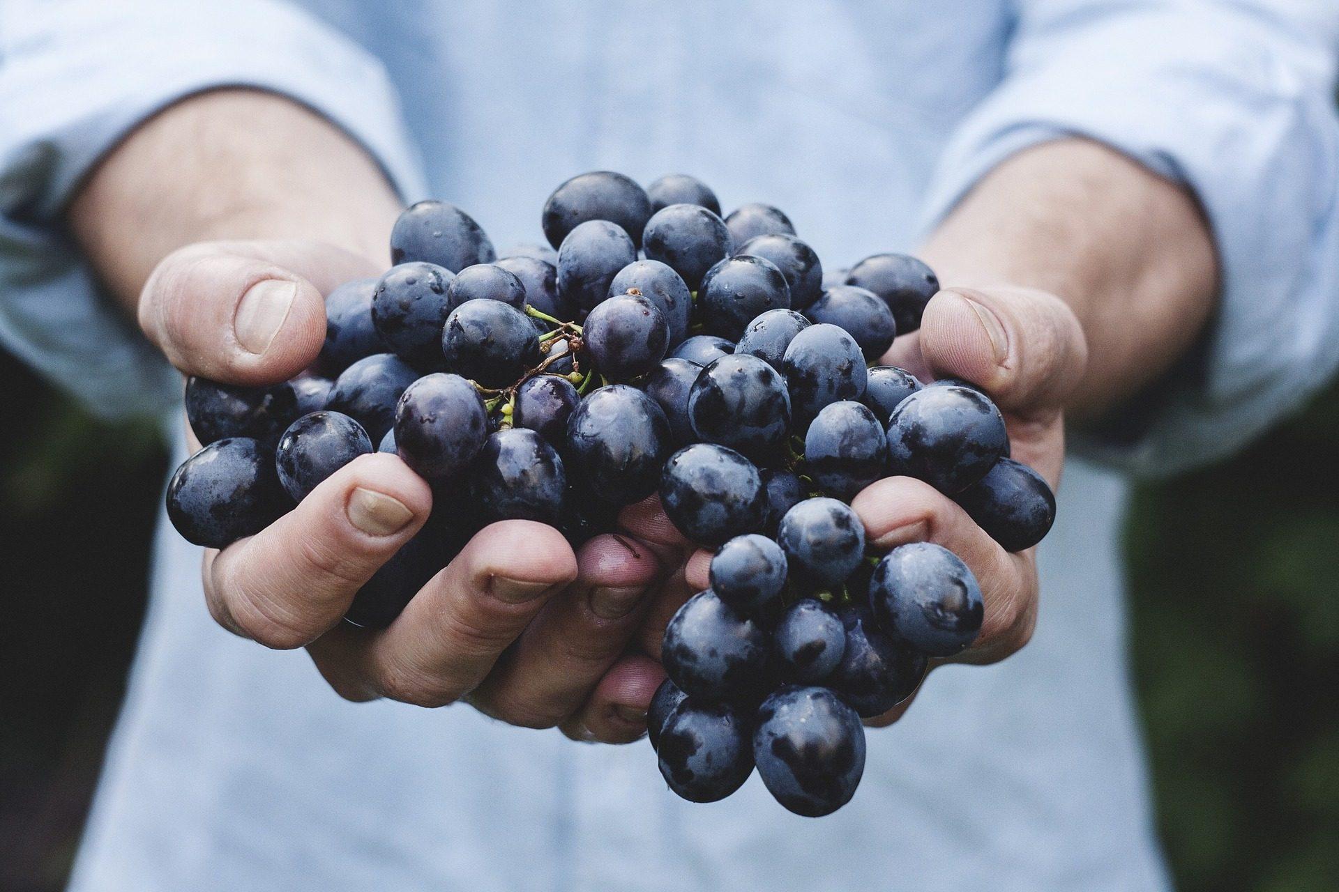 Ovoce ničí rakovina